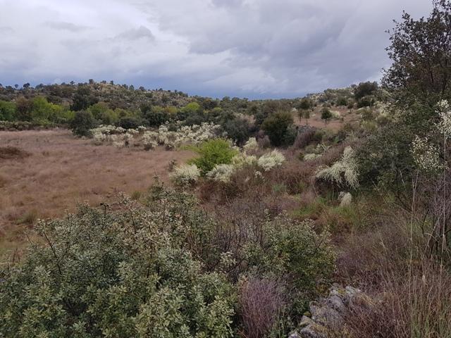 Nieuwe grond met opbrengst Natura Iberica 2018