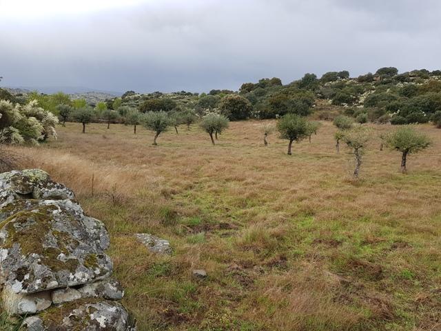 Nieuwe grond met met olijfgaard_opbrengst Natura Iberica 2018